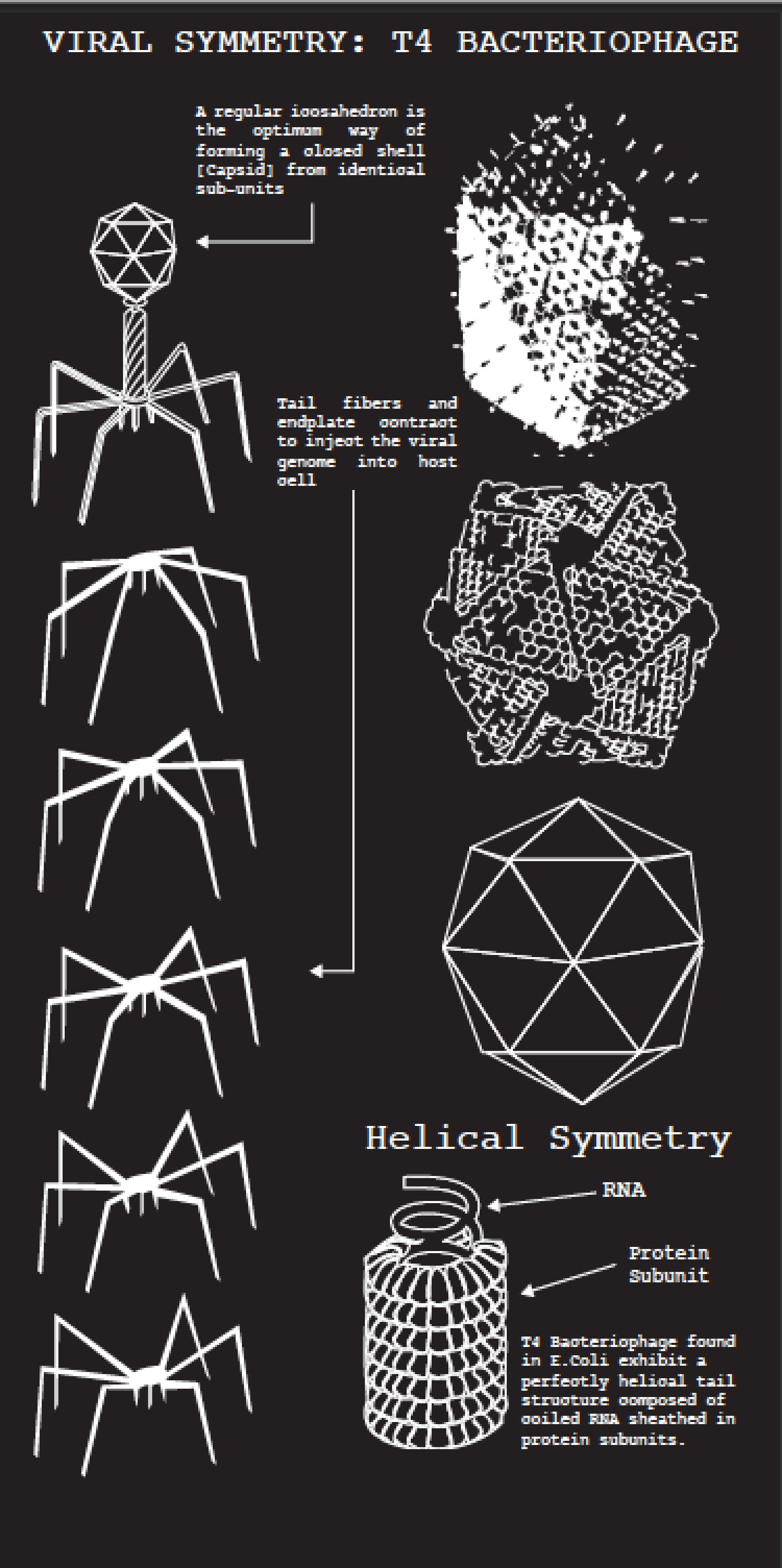Viral Symmetry Infographic