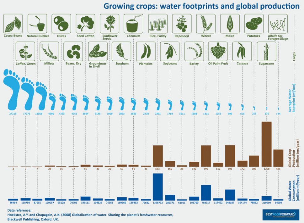 Water Footprint of Crops Infographic