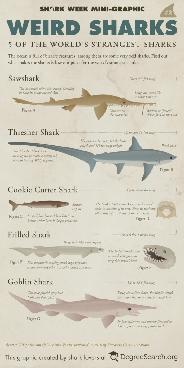 Weird Sharks - The 5 Strangest Sharks Infographic