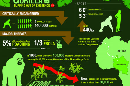 Western Lowland Gorillas Slipping Out of Existence Infographic
