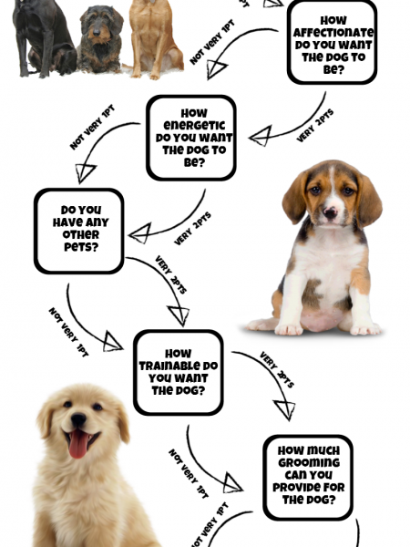 What Dog Should I Get? Infographic