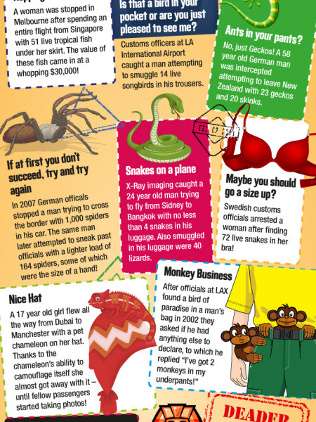 What is THAT in your suitcase?! Infographic
