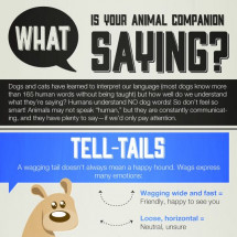 What Is Your Animal Companion Saying? Infographic