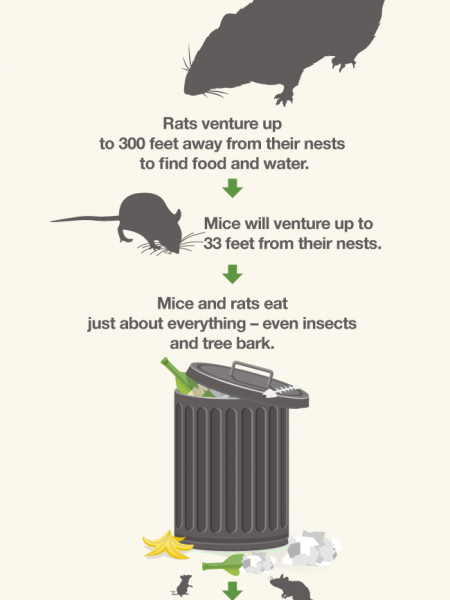What You (Might Not) Want To Know about Mice & Rats Infographic