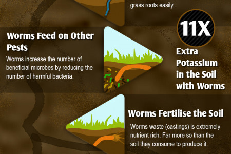 What's an earthworm worth Infographic