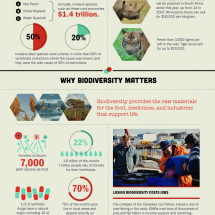 Whats Happening to Biodiversity? Infographic
