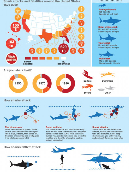 When Sharks Attack Infographic