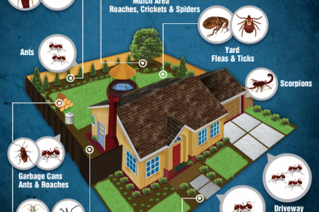 Where are the pests at your house? Infographic