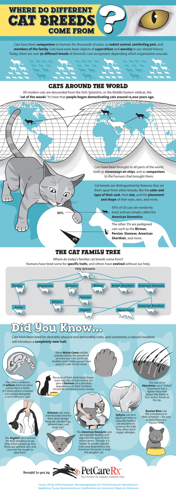 Where Do Different Cat Breeds Come From?