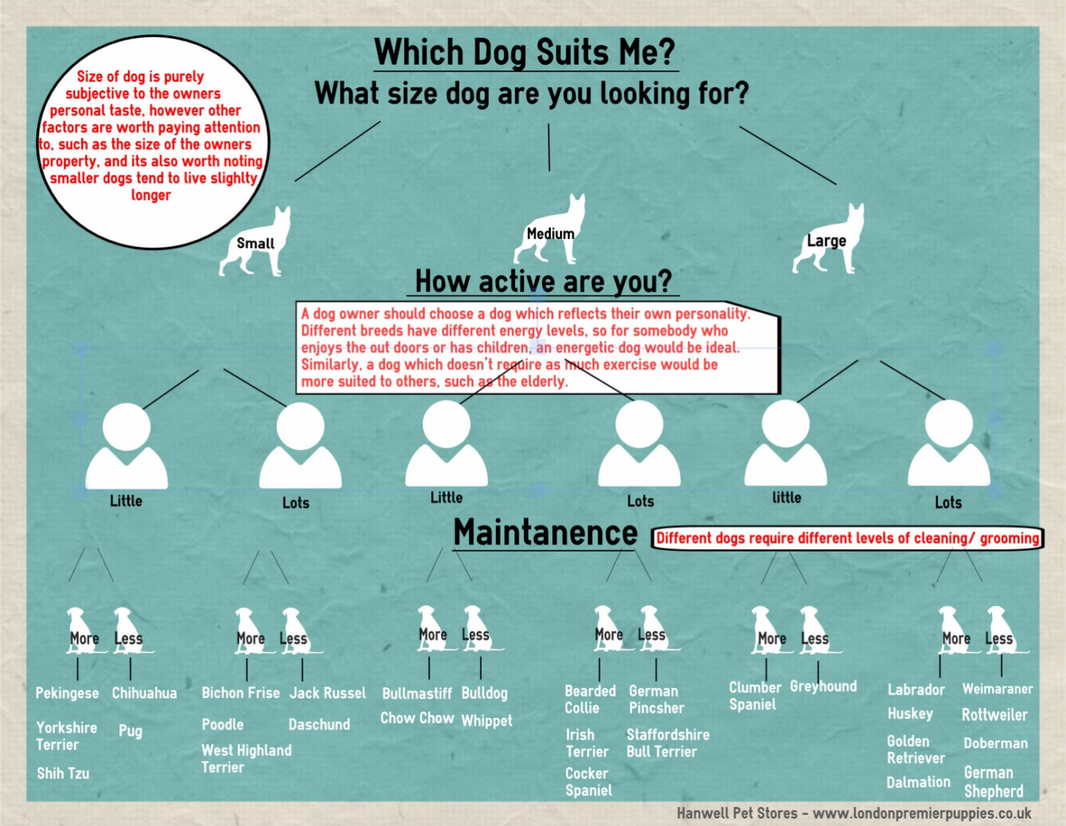 Which dog suits me? Infographic