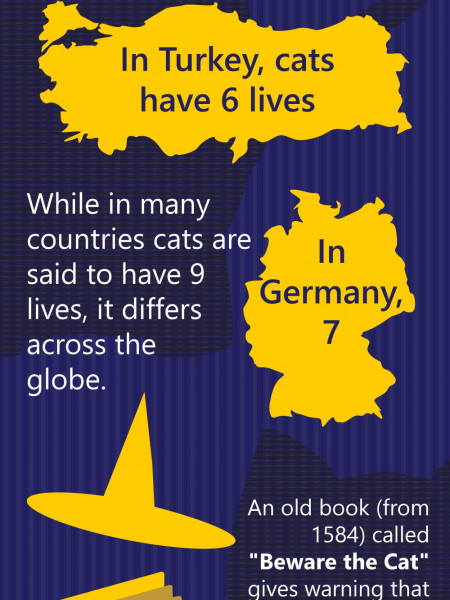 Why Do Cats Have 9 Lives? Infographic