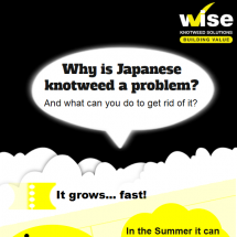 Why is Japanese knotweed a problem? Infographic