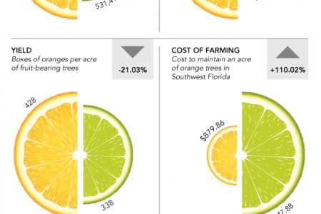 Why Oranges Have Gotten So Expensive Infographic