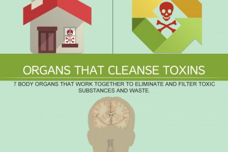 Why You Should Cleanse & Detox Your Body Infographic
