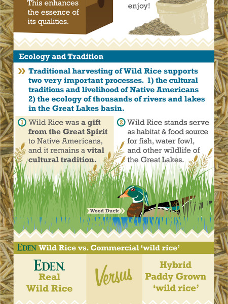 Wild Rice Notes Infographic