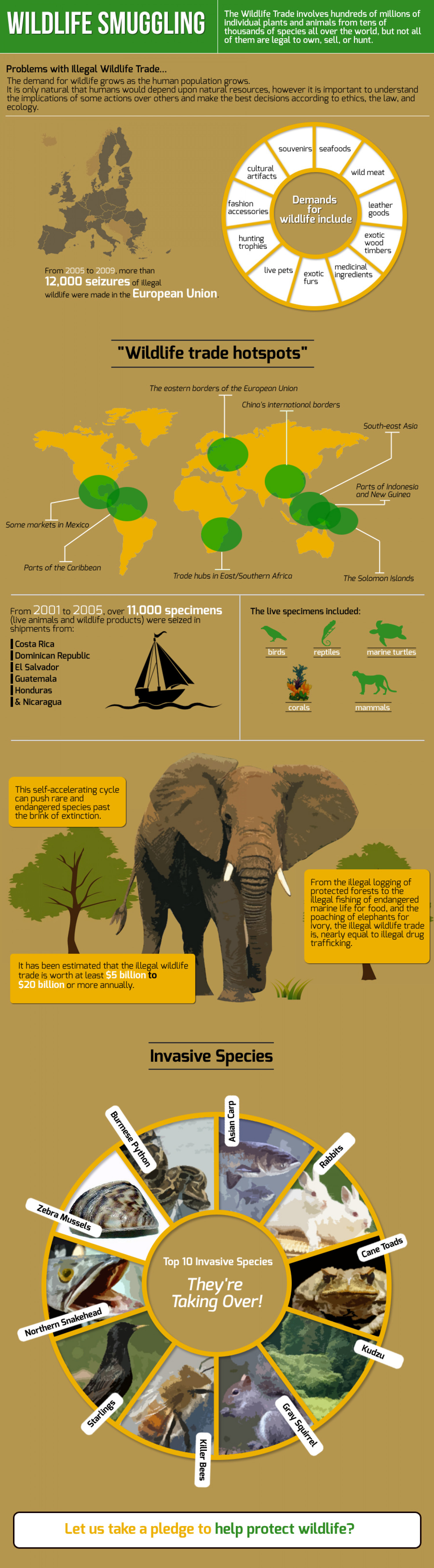 Wildlife smuggling Infographic