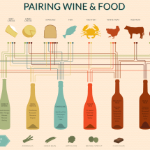 Wine Pairing Chart Infographic