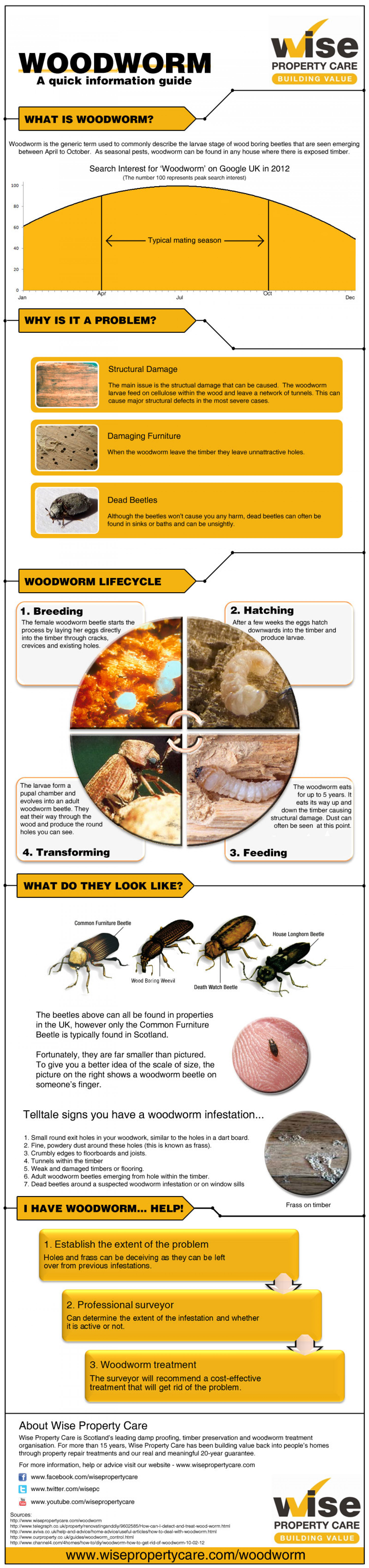 Woodworm information, help and advice Infographic