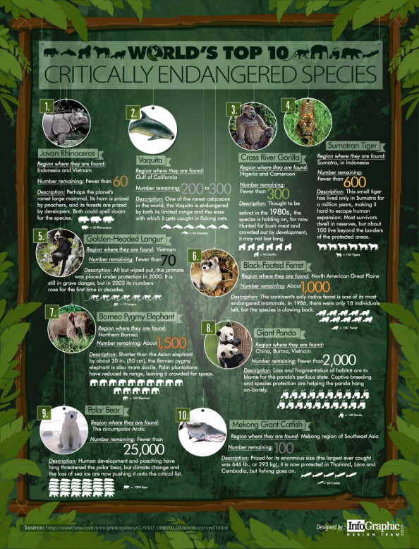 World&#039;s Top 10 Critically Endangered Species Infographic