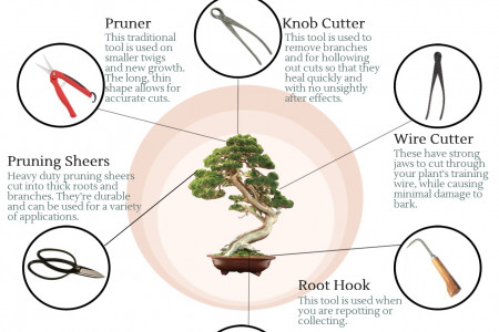 Your Essential Bonsai Toolkit Infographic