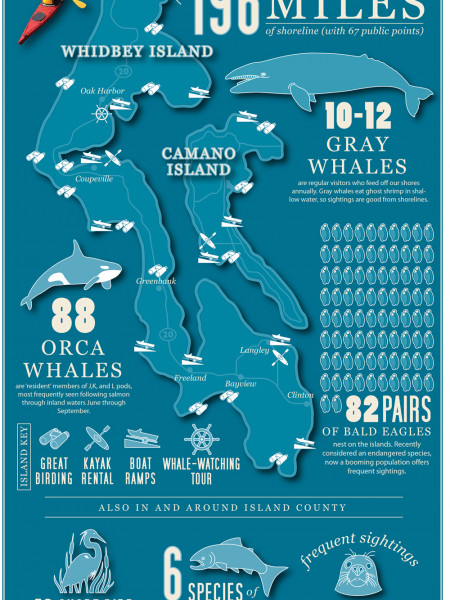 Your Island County Guide to Marine Wildlife Infographic
